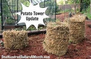 DIY Potato Tower Update - One Hundred Dollars a Month