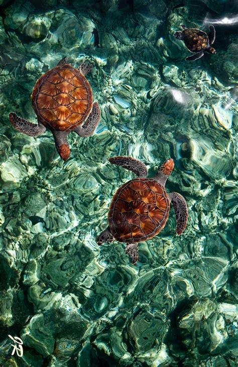 sea turtles pictures   images  facebook