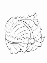 Cabbage Coloring Pages Vegetables Printable Template Cartoon Templates Recommended Colors sketch template