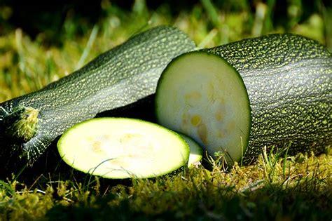 Kann Zucchini Roh Essen by Zucchini Roh Essen Meist Kein Problem Wiressengesund