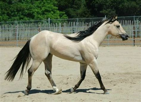 21 Horses With The Most Beautiful & Rare Colors In The World Coffee Cake Gift Basket El Paso Tx Caffeine In Uk Cakes Nedumangad Mary Berry Tray Bake Without Vancouver Glass Tables Auckland