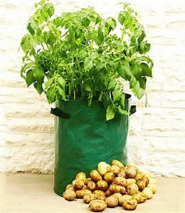 Kartoffeln Zum Einkellern Kaufen : garten mit kartoffeln pflege tipps ~ Lizthompson.info Haus und Dekorationen