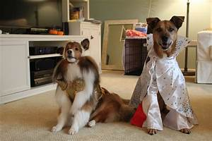 Womens Dog Costume korrectkritterscom