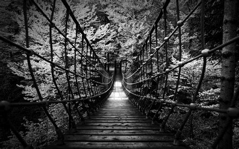 Black And White Woods Wallpaper (52+ Images