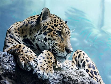 Cool Wallpapers Of Animals - cool animal wallpapers wallpaper cave