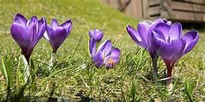 Zeit Für Frühling : fr hling zeit f r einen fr hjahrscheck eberle bau landau ~ Orissabook.com Haus und Dekorationen