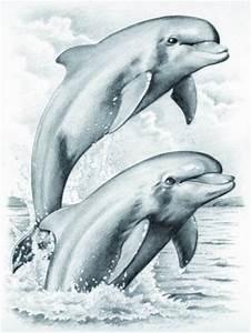 Schöne Delfin Bilder : delfine malen mit bleistiften malen nach zahlen delfin delphin malvorlage kinder ebay ~ Frokenaadalensverden.com Haus und Dekorationen