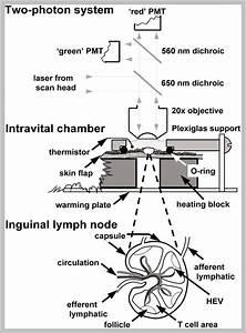 Skeleton Labeling Diagram