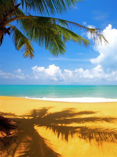 Nature Tropical Palm Tree On Beach Ipad Iphone Hd