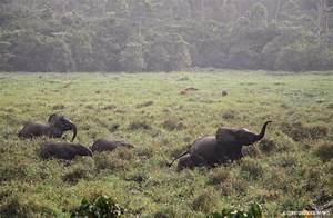 Wildlife Of Mbeli Bai  U2013 Wcs Congo Blog