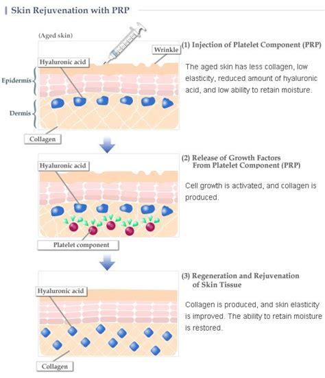 Facial Skin Cells Diagram