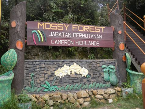 Trek N Trail Mossy Forest At Cameron Highlands Malaysia