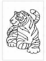 Coloring Pages Tiger Preschool Tigers Lsu Drawing Template Crafts Getdrawings sketch template