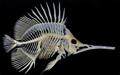 Animal Skeleton Wallpaper - skeleton wallpapers wallpapersafari