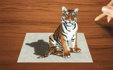 colored pencil drawing   young tiger speed draw