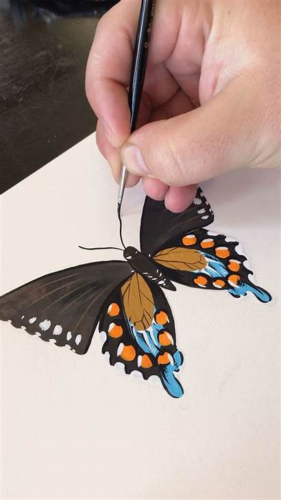 Butterfly Painting Boelter Gouache Drawing Philip Drawings