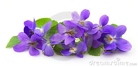 violets clipart clipground