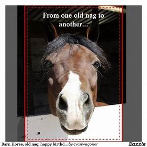 102 best images... Funny Christmas Horse Quotes