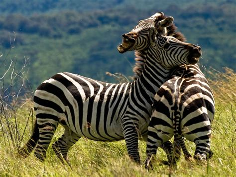 Animal Safari Wildlife that makes you say WOW! [40 PICS]