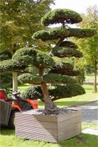 Japanische Gärten Selbst Gestalten : japan garten kultur japanische gaerten japangarten ~ Lizthompson.info Haus und Dekorationen