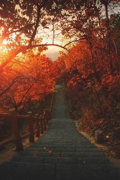 Autumn Gifs Fall Leaves Falling Animated Trees