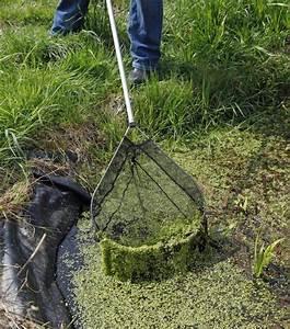 Algen Im Teich Entfernen : 25 sch ne algen im teich ideen auf pinterest blumentopfkunst h ngender korb haken und feenm bel ~ Orissabook.com Haus und Dekorationen