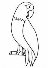 Parrot Coloring Pet Pages Print Colornimbus sketch template