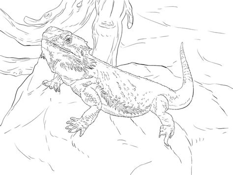 coloring pages water dragon printable  kids adults