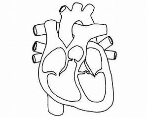 Basic Heart Diagram