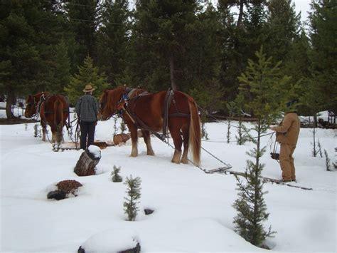 horse horses logging draft woods natural horsemanship