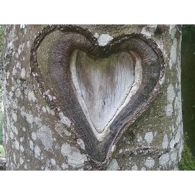 Free photo: Heart Tree Love Nature Romance -