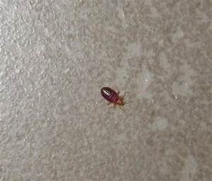 Bed bug on bathroom floor picture of candlewood suites for Small brown bugs in bathroom