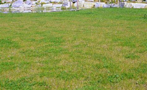 Hilft Kalk Gegen Pilze Im Garten by Flechten Im Rasen Moos Im Rasen Ein Ewiges Rgernis