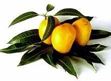 National Fruit Of India - Indian National Fruit - India ...