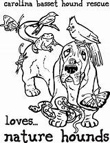 Basset Hound Coloring Sheets Template sketch template