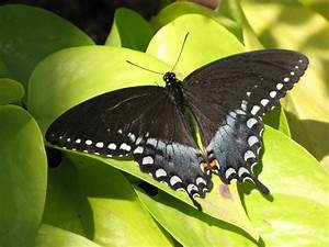 Pin by pat zimbelman on butterflies dragonflies birds for Phoenix butterfly garden