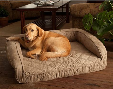 coolaroo bed large coolaroo bed large pet photos gallery