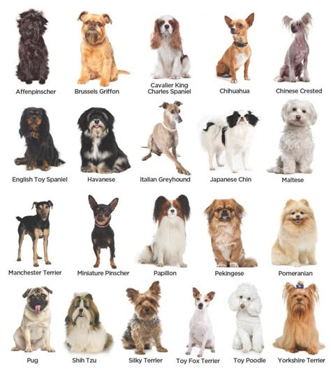 easily build  dog breed image classification model