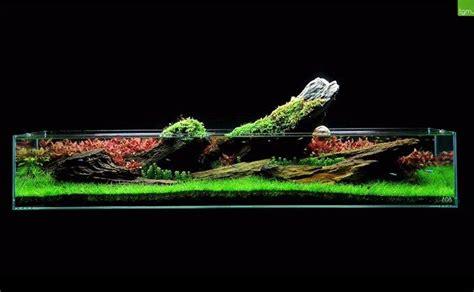 Green Machine Aquascape - the green machine is a uk aquarium shop specializing in