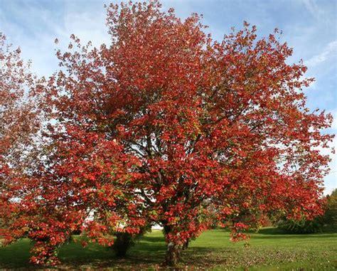 Autumn Splendor In Penobscot