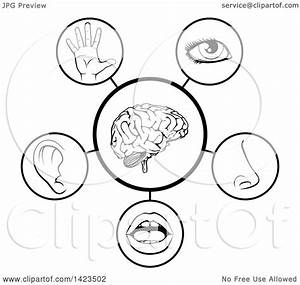 Clipart Of A Black And White Diagram Of The 5 Senses