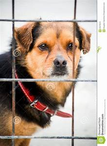 Dog In Cage Royalty Free Stock Photo - Image: 25070515