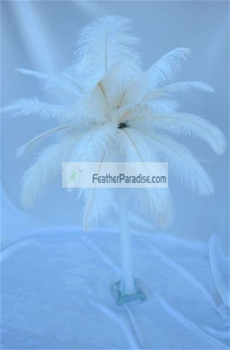 ivory ostrich feather centerpieces  sets wedding