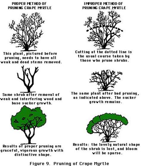 how to trim a bush pruning maintaining shrubs and trees todaysmower com