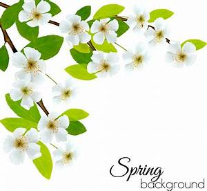 Spring background with white flowers vector Free vector in ...