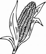 Corn Coloring Cob Stalk Stalks Drawing Indian Pages Printable Clipart Cartoon Ear Plant Cliparts Clip Colorir Freecoloringpagefun Gem Clipartmag Artesanato sketch template