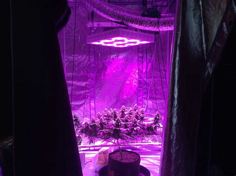 led plant grow lights hps vs led grow lights 5 barriers to light