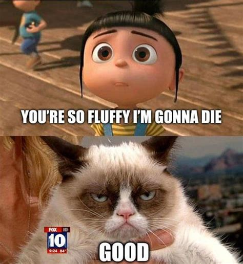 Grumpy Kitty Meme - top 40 funny grumpy cat pictures and quotes quotes and humor
