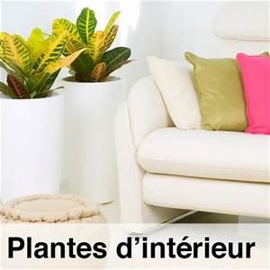 Arbuste D Intérieur : fiches conseils plantes d 39 int rieur espace plantes ~ Premium-room.com Idées de Décoration