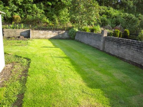 Growing A Good Lawn In Shady Areas